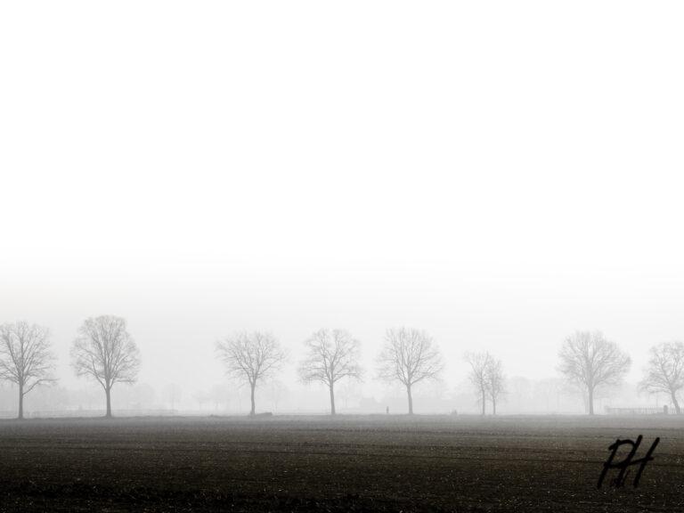 Rijtje bomen in de mist